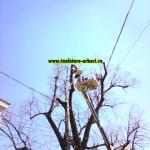 www.toaletare-arbori.ro (11)