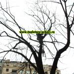 www.toaletare-arbori.ro (17)