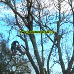 www.toaletare-arbori.ro (20)