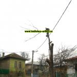 www.toaletare-arbori.ro (24)
