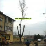 www.toaletare-arbori.ro (25)