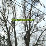 www.toaletare-arbori.ro (26)