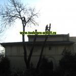 www.toaletare-arbori.ro (27)