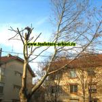 www.toaletare-arbori.ro (28)
