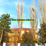 www.toaletare-arbori.ro (29)