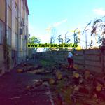 www.toaletare-arbori.ro (3)