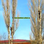 www.toaletare-arbori.ro (30)