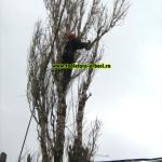 www.toaletare-arbori.ro (31)