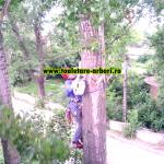 www.toaletare-arbori.ro (35)