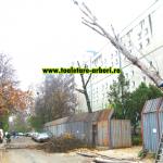 www.toaletare-arbori.ro (36)