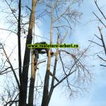 www.toaletare-arbori.ro (41)