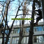 www.toaletare-arbori.ro (43)