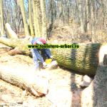 www.toaletare-arbori.ro (45)