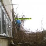 www.toaletare-arbori.ro (5)