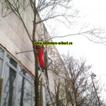 www.toaletare-arbori.ro (6)
