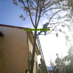 www.toaletare-arbori.ro (8)