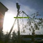 www.toaletare-arbori.ro (9)